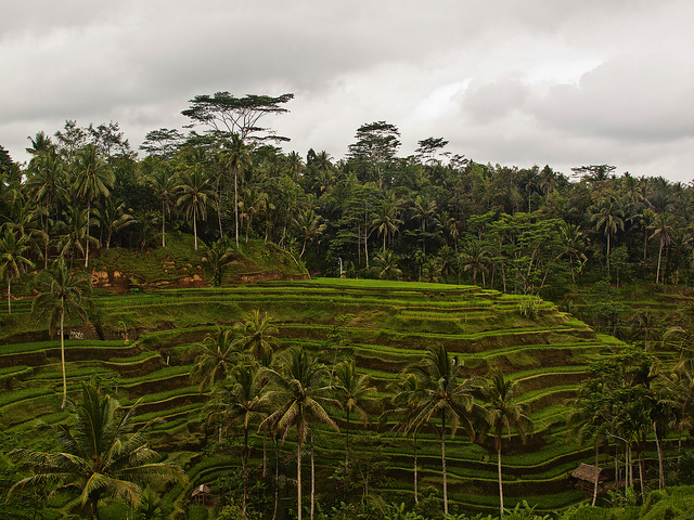 Foto: Tegallantang Rice Terrace, Bali - Kevin Poh